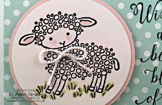 Lamb card dotted close up