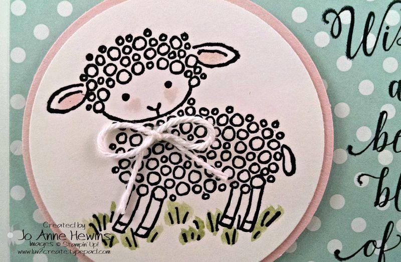 Lamb card dotted close up
