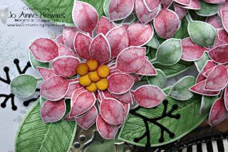Poinsettia Christmas frame close up
