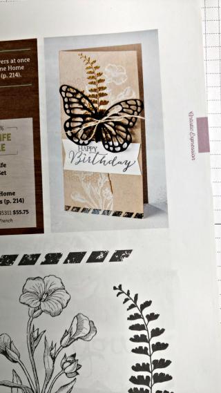 Butterfly Basics catalog