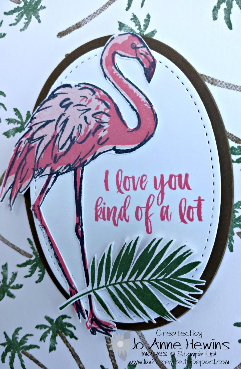 Fabulous Flamingo close up