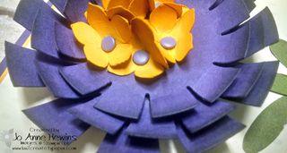 Sunburst flower close up