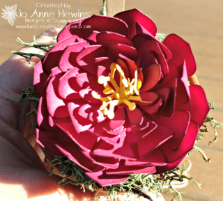 B pot flower