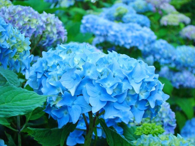 NC flowers