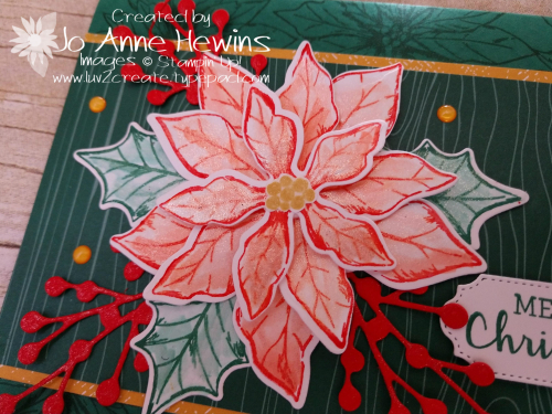 Color Fusers November Close Up Poinsettia Petals by Jo Anne Hewins