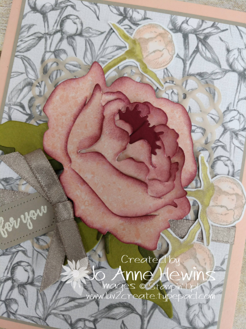 Prized Peony Close Up by Jo Anne Hewins