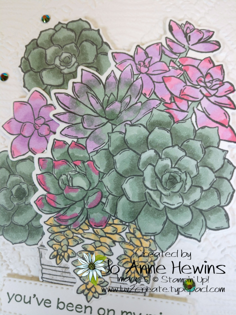 Color Fusers for June 2021 Close Up of Simply Succulents by Jo Anne Hewins