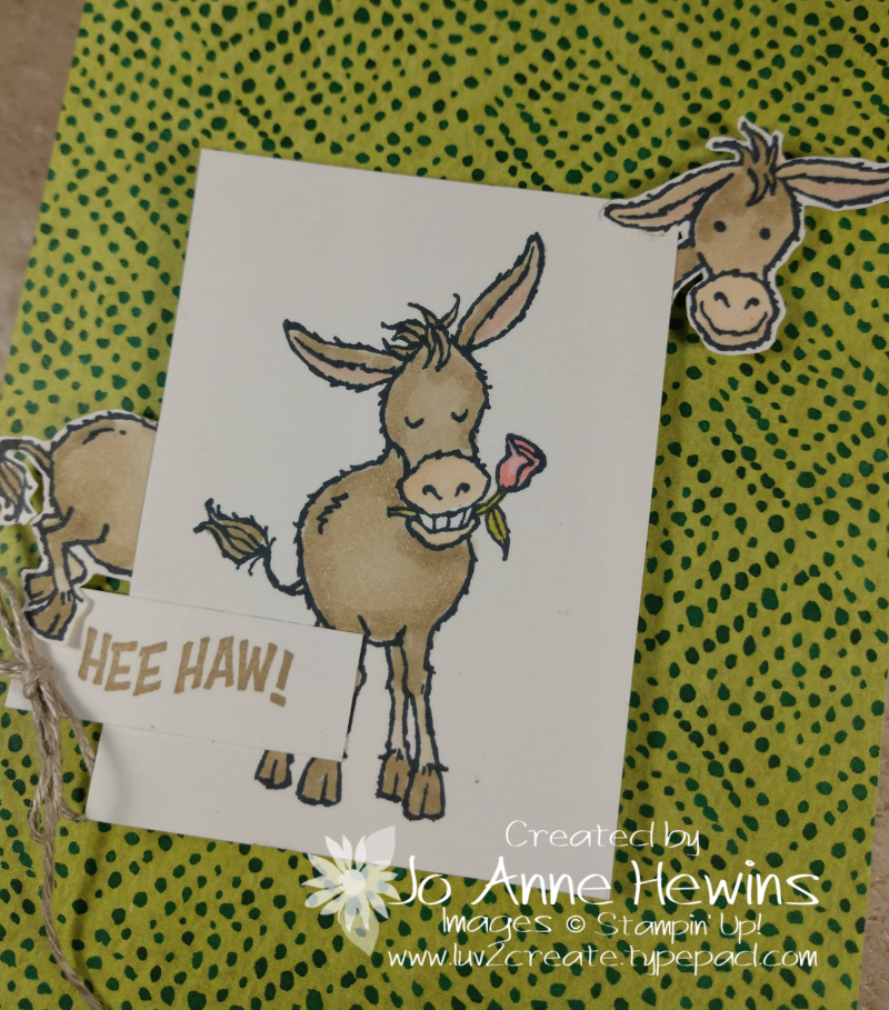 CCMC#643 Darling Donkeys Close Up by Jo Anne Hewins